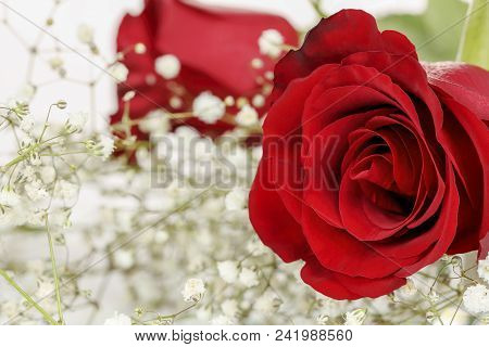 Macro Of A Bouquet Of Red Roses With Gypsophila