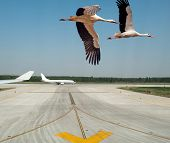 Storks taking off from an airport of Shanghai, China poster