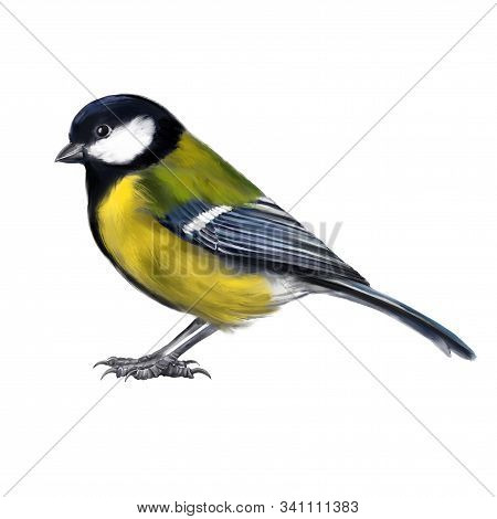Bird Titmouse, Art Illustration Painted With Watercolors Isolated On White Background