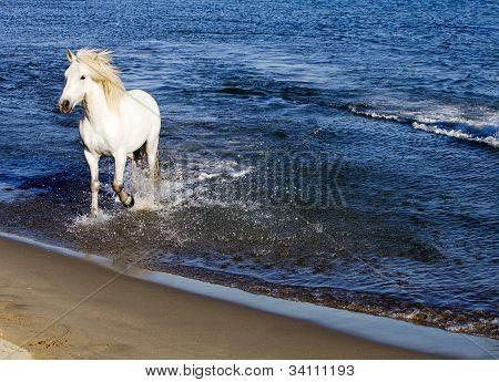 White Horse Splashing