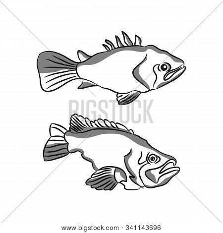 Hand Drawn Vector Illustration Of Fish Isolated On White Background. Retro Style.