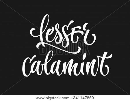 Vector Hand Drawn Calligraphy Style Lettering Word - Lesser Calamint. Isolated Script Spice Text Lab