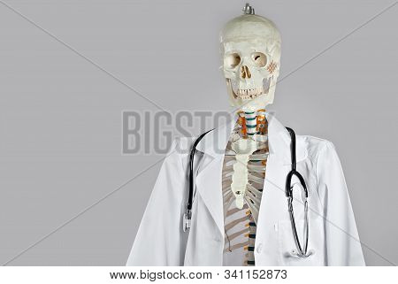 Mockup Of Human Skeleton Isolated On Gray Background. Skeleton For The Study Of Anatomy. Demonstrati