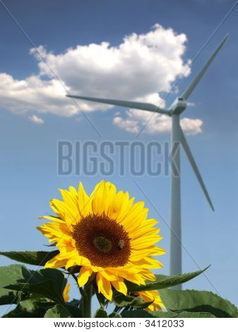 Sunflower with bee in front of a windmill and a cloud poster
