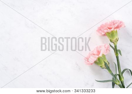 Beautiful, Elegant Pink Carnation Flower Over Bright White Marble Table Background, Concept Of Mothe