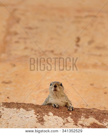 Closeup Of Squirrel Looking At Camera In Front Of A Yellow-orange Ochre Wall