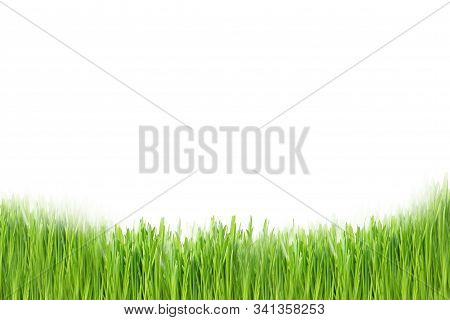 Green Grass At The Bottom Of The Layout In A Row Close-up On A White Background. Design And Substrat
