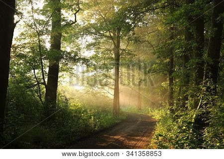 Spring forest path landscape Nature sunrise Nature sun landscape Nature background Nature landscape woods trees Nature background Nature landscape mist Nature background foggy Nature landscape light Nature landscape Nature landscape Nature background.