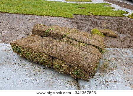 Green Fresh Sod Grass In Rolls For Lawn And Designer Landscape A Roll On Pallets.
