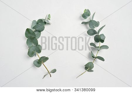 Eucalyptus Leaves Frame On White Background With Place For Your Text. Wreath Made Of Leaf Branches.