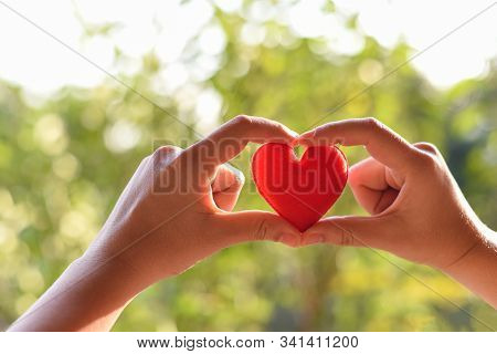 Heart In Hand For Philanthropy Concept / Woman Holding Red Heart In Hands For Valentines Day Or Dona