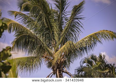 Dominican Palm Detail