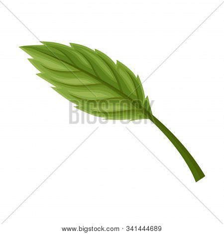 Seasonal Leaf With Fibres Isolated On White Background Vector Element
