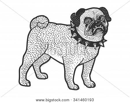 Angry Evil Pug Pet Dog In Spiked Collar Sketch Engraving Vector Illustration. T-shirt Apparel Print