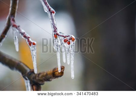 Freezing Rain On The Branches With Red Buds