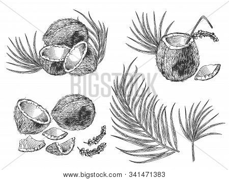Engraved Illustration Of Coconuts, Palm Leaves And Cocktail. Vector Hand Drawn Sketch Of Tropical Fo