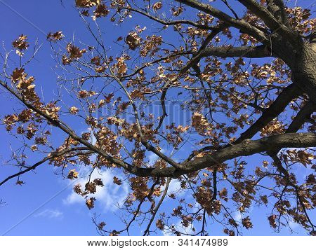 Blue Sky And Fall Tree Branches In Washington Dc
