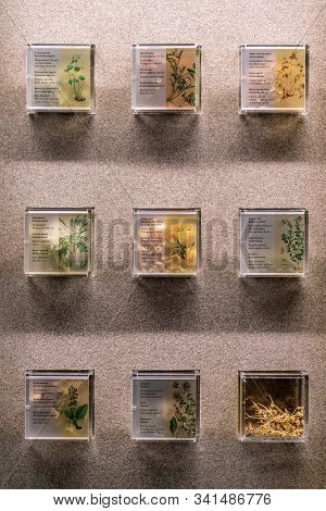 St. Magdalena, South Tyrol, Italy -  October 23, 2019: Display Of Alpine Flowers At The Naturparkhau