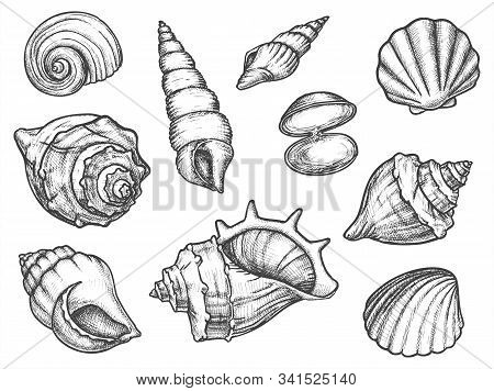 Set of isolated seashell sketches or silhouette of conch, ocean shell or mollusk scallop, sea or underwater animal fossil. Cockleshell or cockleboat. Nautical and aquarium, underwater and marine theme