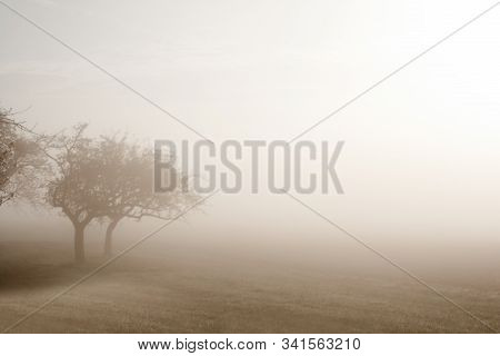 Trees In Fog, Unfocused Mystic And Sad Scenery. Stock Photo With Tex Space