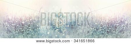 Frosty Dew On Grass In Meadow, Frozen Dew In Early Morning