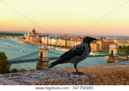 A Big Carrion Crow Sits On The Parapet. Blurred Cityscape Of Budapest In The Background. Autumn Even