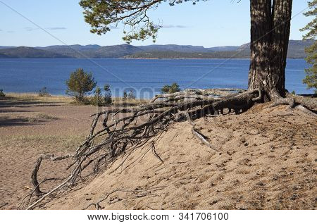 Trunk And Root, Base In Sandy Ground. Beach, Shore In The Background. Sunshine.