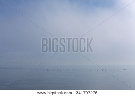 Morning Fog Above The Water. Groups Of Birds At Sea. Calm Sea.