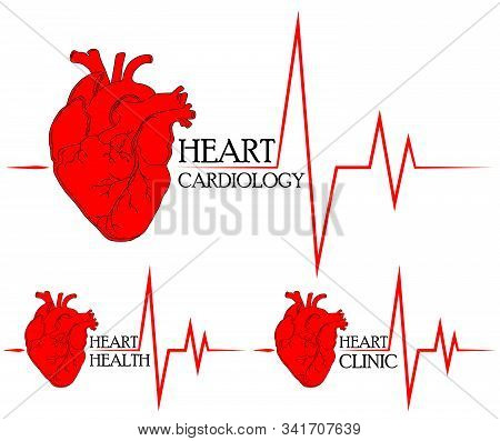 Anatomical Drawing Of The Heart. Background For Brochures, Booklets, Flyers. Set Of Red Hearts Icons