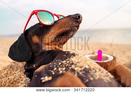 Funny Dog Of Breed Dachshund, Black And Tan, Buried In The Sand At The Beach Sea On Summer Vacation