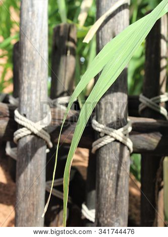 Green Plant Leaf On Wooden Fence Rail