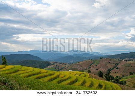 Beautiful Rice Terraces In Pa Bong Piang, The Rural Village In Chiangmai, Thailand