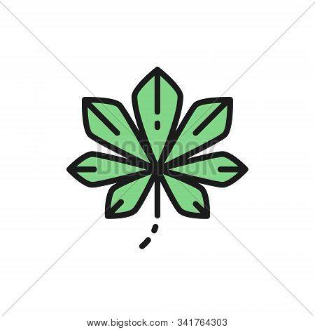 Chestnut Tree Leaf, Kyiv Chestnuts Flat Color Line Icon.