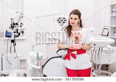 Portrait Of Female Dentist Or Hygienist With Artificial Jaws A In Modern Clinic