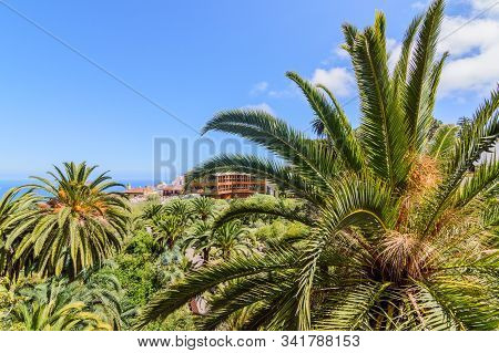 Palm Trees In A Forest In The Village Of Icod De Los Vinos. April 14, 2019. Icod De Los Vinos, Santa