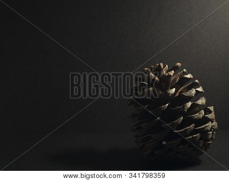 Single Pineapple Still Life In Low Key Background And Ilumination