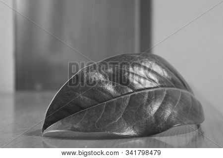 Close Up Of A Leaf In Black And White