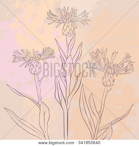 Vector Drawing Flowers At Vintage Pink Background, Floral Composition, Hand Drawn Illustration