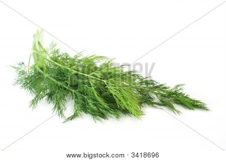 Fresh Dill Herb On White