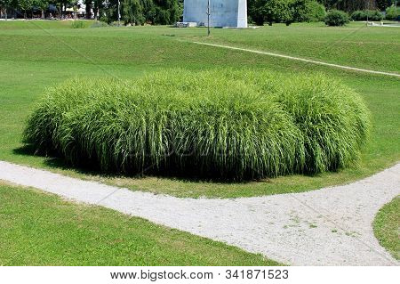 Large Densely Growing Bush Like Ornamental Grass Planted In Local Public Park Surrounded With Freshl