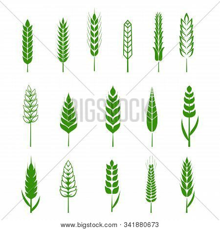 Set Of Simple Wheats Ears Green Icons And Grain Design Elements For Beer, Organic Wheats Local Farm