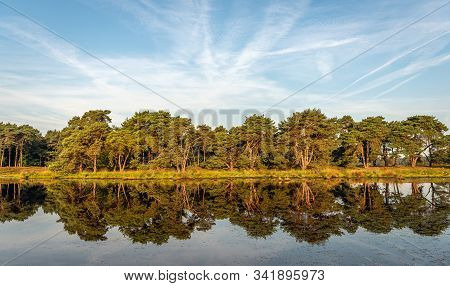 Row Of Trees Reflected In The Mirror Smooth Water Surface Of A Dutch Lake On A Windless Summer Day.