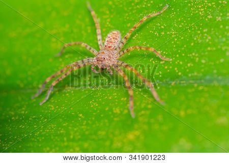 Orange Striped Spider On Green Leaf In Forest