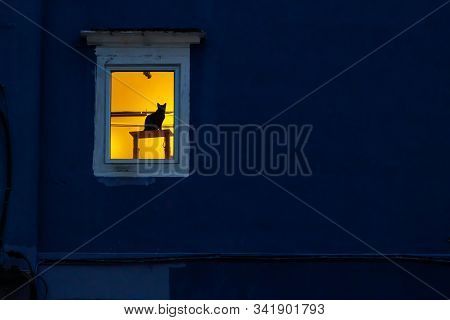 Silhouette Cat On Wooden Table At Window In Lighten Room With Dark Blue Wall