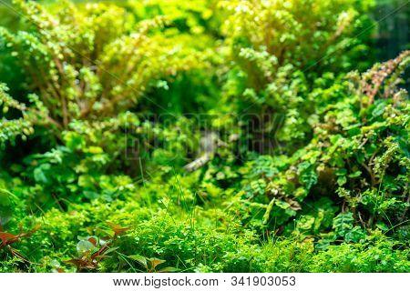 Bright Green Vegetation Cover Of Herbs. Natural Green Vegetation.