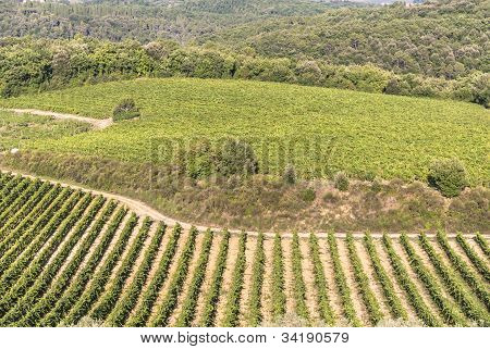 Vineyards on the hills of Chianti, in the province of Siena. Tuscany, Italy. poster