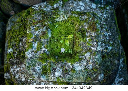 Vulci, Italy - December 26, 2019: Archaeological Finds Of The Etruscan Era In The Park Of Vulci, An