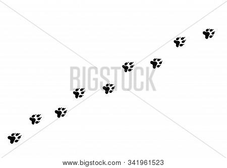Footpath Trail Of Animal. Dog Or Cat Paws Walking Randomly Print Vector Isolated On White Background