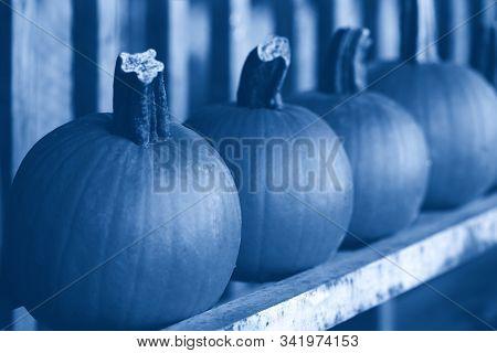 Fresh Harvest Pumpkins On Shelf At Farm Market. Halloween And Thanksgiving Holiday. Natural Monochro
