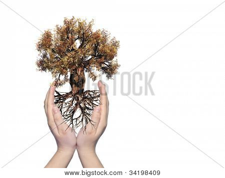 Concept or conceptual old green baobab tree with root held in hands and protected by a young woman isolated on white background,for nature,natural,environment,development,ecological,protection or life